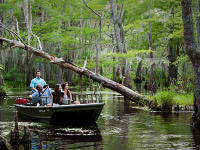 Louisiana Swamp Tour near New Orleans