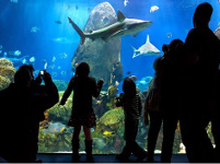 Chattanooga's Tennessee Aquarium