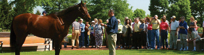 Horse Farm Tours, Lexington